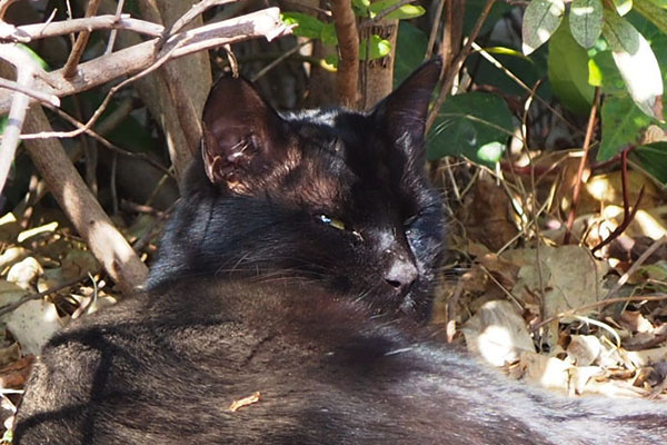 alone black cat sunbathing
