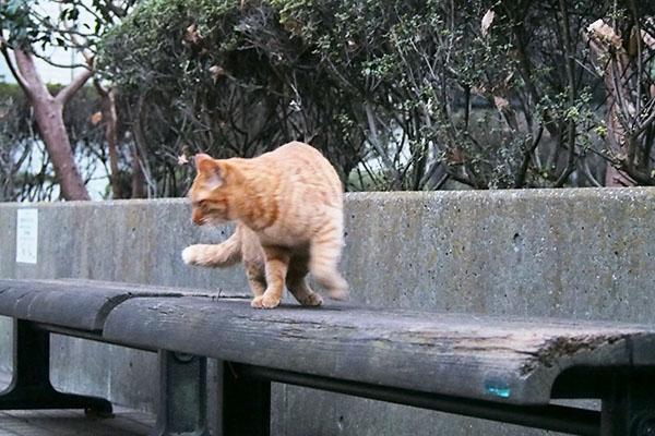 階段を降りてベンチの上アン