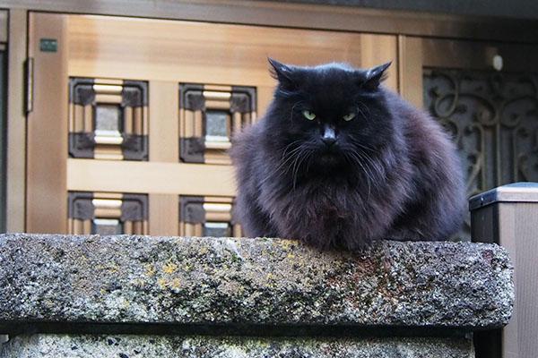門番の時は恐い顔ハリマ