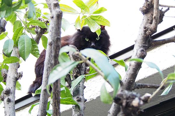 木の枝が重要だったハリマ