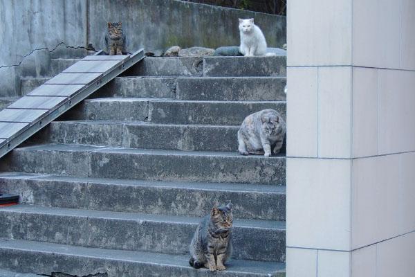 階段付近に5にゃん