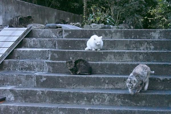 5にゃん居る階段