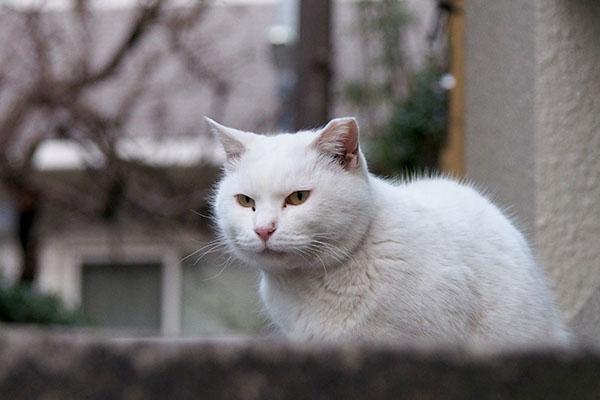 haku serious face