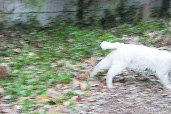 白猫さんダーーッシュ