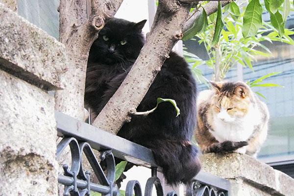 木の枝に挟まるハリマ