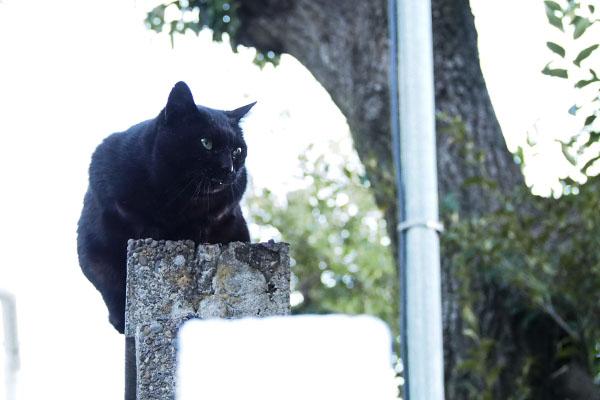 険しい表情が似合う黒猫ココ