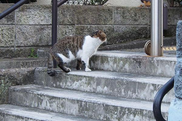 階段にレオ太