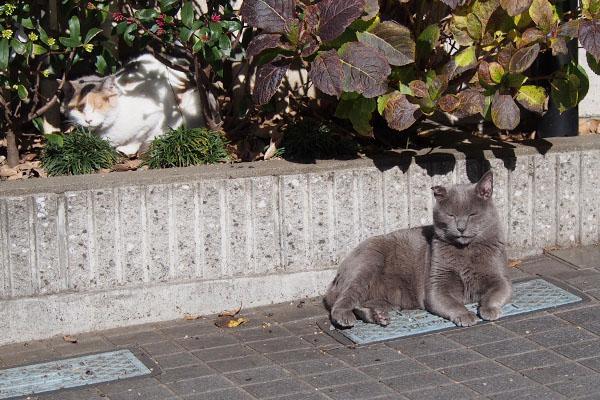 シニア猫2
