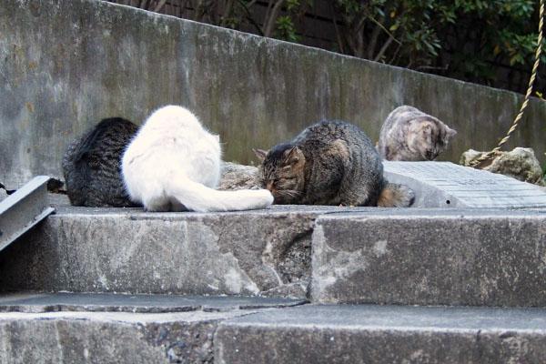4猫 タビゾンヌ参加