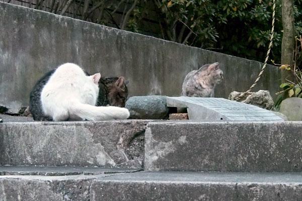 3猫 タビゾンヌ離脱