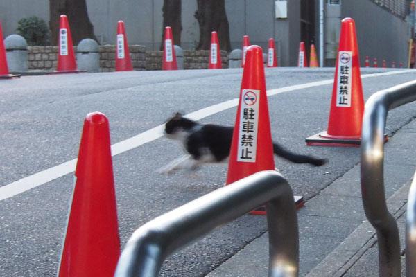道路を横断するコズ