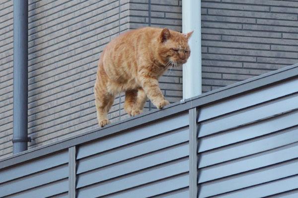 みんにゃを見てるコルレフェンス上