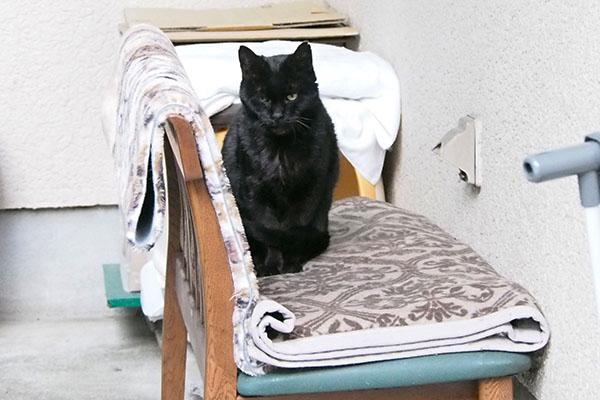 黒猫のアカシ君
