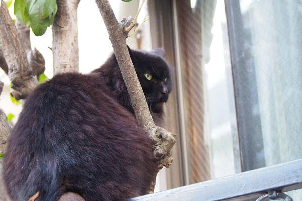 木に挟まって良い顔のハリマ