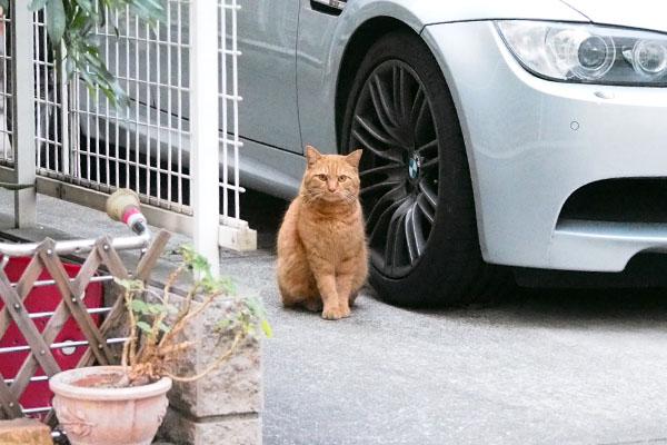 gingercat_ami