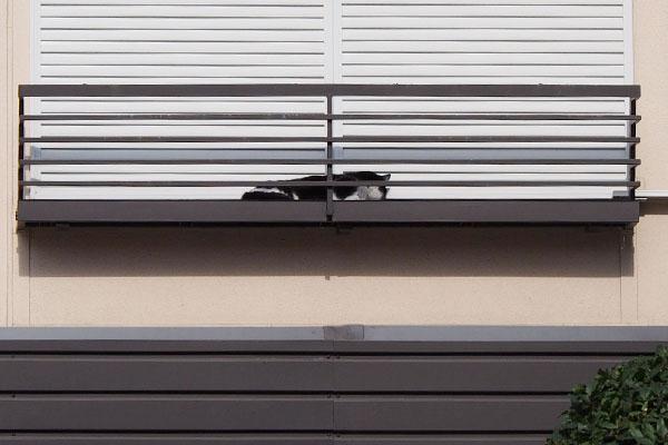 近くの窓辺にスズ