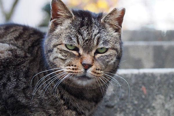 タビッツ宇宙猫風の目