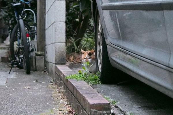 車の後ろに隠れるせん