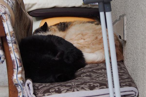 アズマとオトワとナリコ熟睡モード