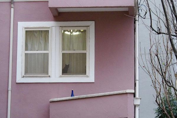 窓辺のにゃんこ黒猫ちゃん