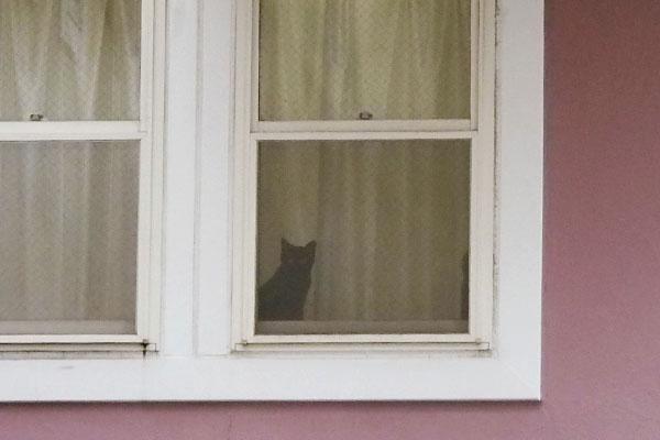 ズームしてみた黒猫ちゃん