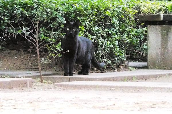 outside bk cat