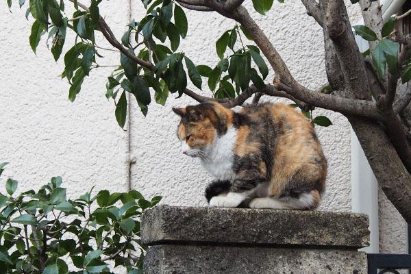 オトワちゃんは瞑想中