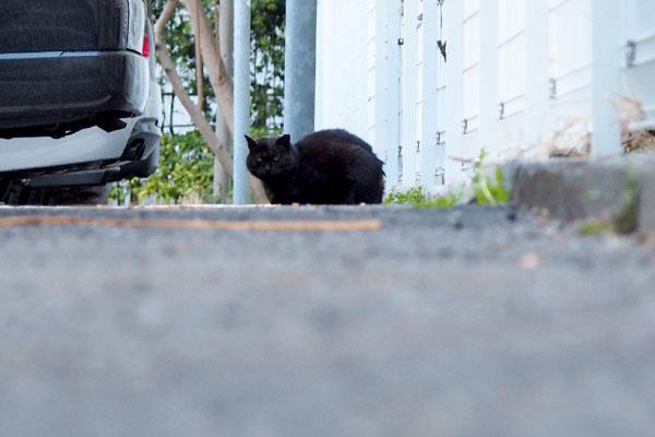 ミトンは駐車場側にちんまり