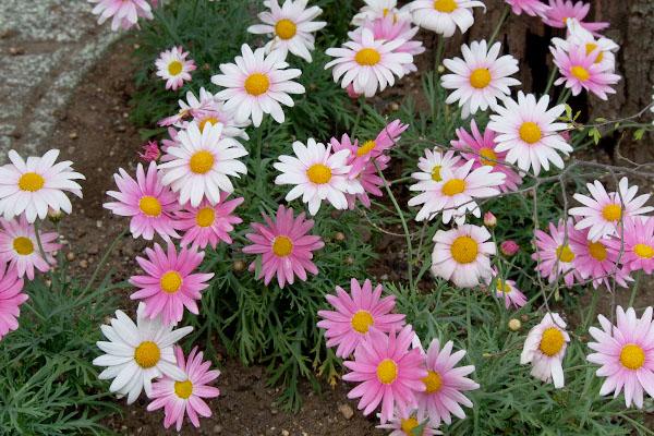 十番の歩道の花その1