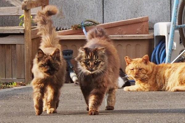 happy three cats