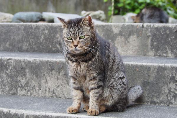階段を降りて待つタビッツ