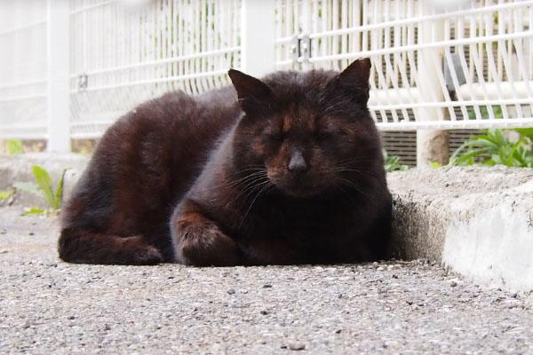 フェンス寄りで寝ていたミトン