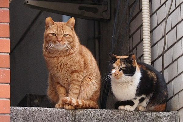 kabu and riko