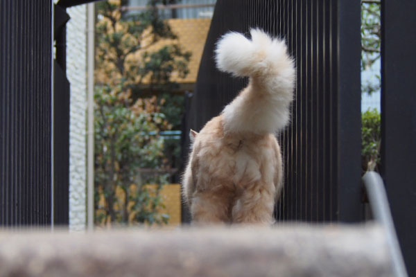 fluffy tail of Narikoma