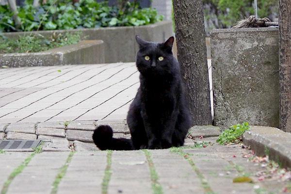 お座りして見て来る黒猫さん