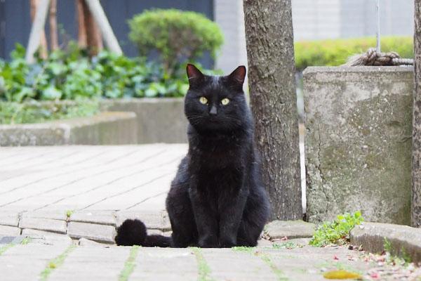 near mary bk cat 1st met