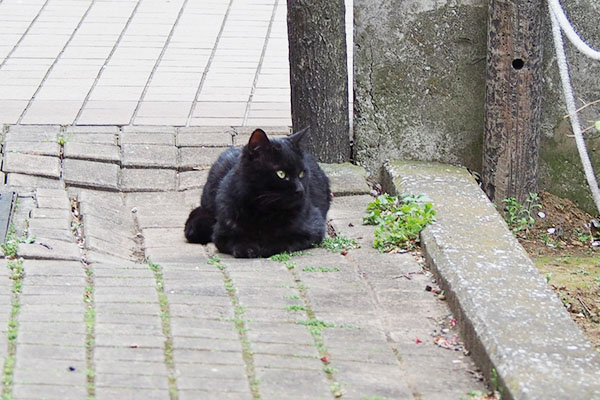 周りを見る余裕もある黒猫さん