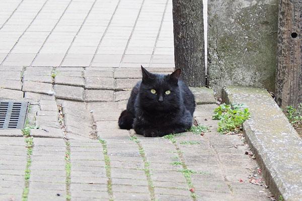 地面んいふせた黒猫さん