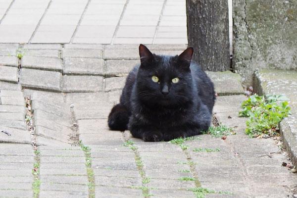 フォトジェニック黒猫さん