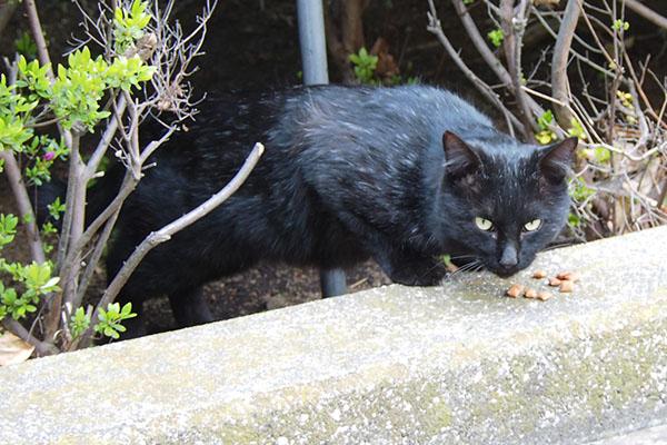 追加をありがとうな黒猫さん
