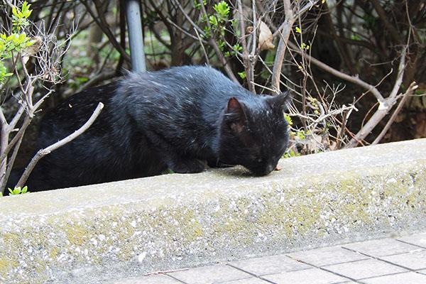 お腹は減っていた黒猫さん