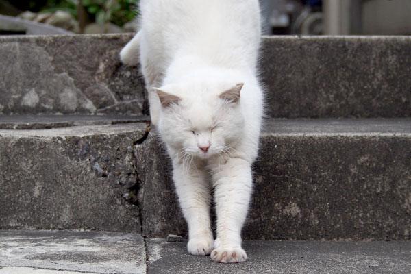 階段降りながら伸びハク