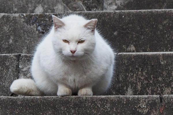 階段でちんまりハク