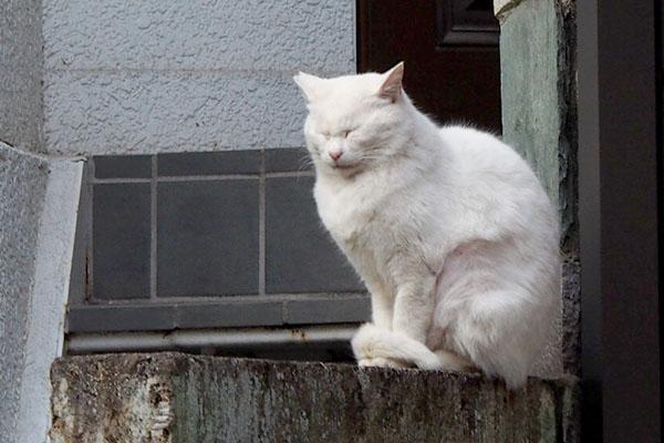 目を閉じているチロル塀の上