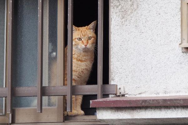 窓から見てるソラちゃん