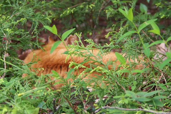 近くにコダが寝ていた