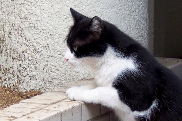 suzu cute profile before pee