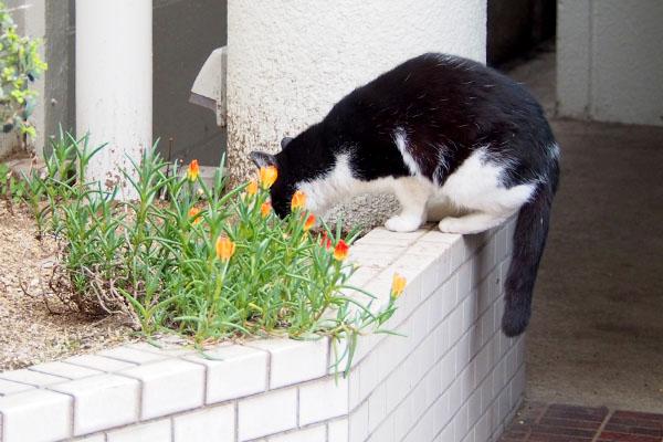 花壇の土の匂いを嗅ぐスズ