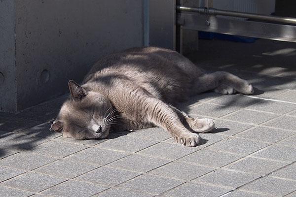 後ろ足がかわいい寝姿ロシグ