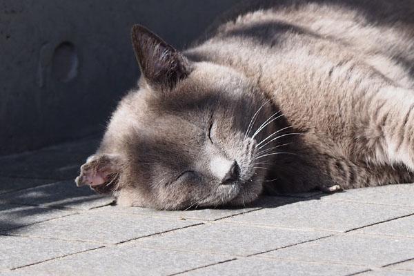 かわいい寝顔ロシグレ君